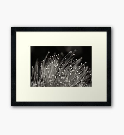 Abstract Nature II Framed Print