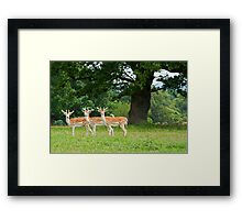 Cheese!!!! Framed Print