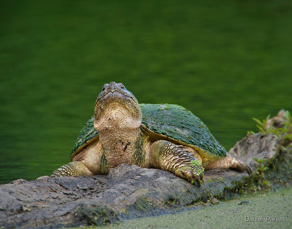 Periscope Up  by Daniel  Parent