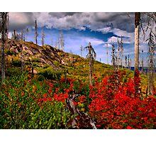 Oregon Fall Photographic Print