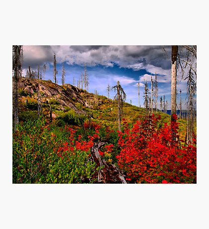 Oregon Fall Photographic Print