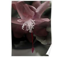 Red Cactus Flower Poster