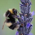 Bumble be in Profile  by Floydwilson