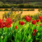 Red By The Roadside by Nigel Finn