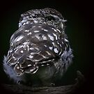 The Little Owl by snapdecisions