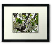 Beauty at the base Framed Print
