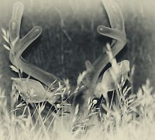 Black & White Buck by Dallas Kempfle