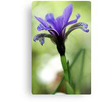 Holt Pond - Blue Flag (Iris) Metal Print