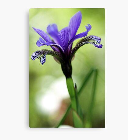 Holt Pond - Blue Flag (Iris) Canvas Print