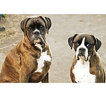 Luthien & Arwen -Boxers Dogs Series- Photographic Print