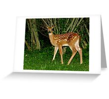 Oh Hi!  Nice to Meet You (White-tailed Deer Fawn) Greeting Card