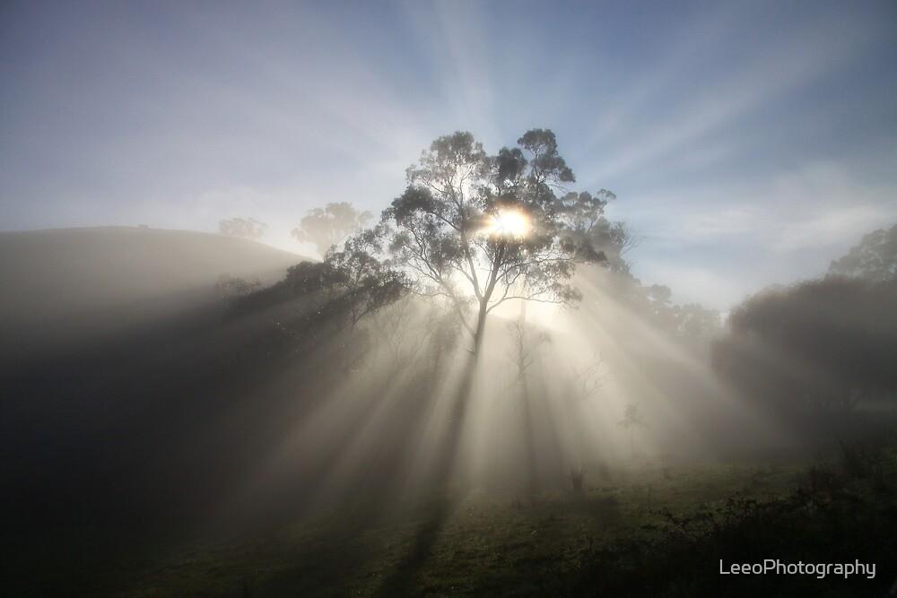~ *Sunburst* ~ by LeeoPhotography