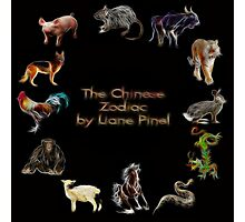 Chinese Zodiac - Complete by Liane Pinel Photographic Print