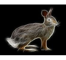 Rabbit - Chinese Zodiac by Liane Pinel Photographic Print