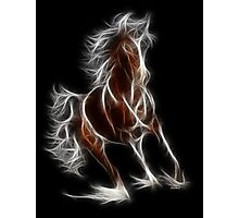 Horse - Chinese Zodiac by Liane Pinel Photographic Print