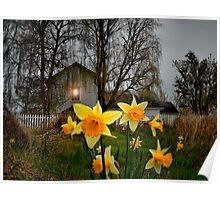 Daffodil's at Finley Refuge. Poster