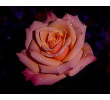 Rose Multicolors Photographic Print