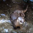The little otter  by Loretta Marvin