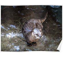 The little otter  Poster