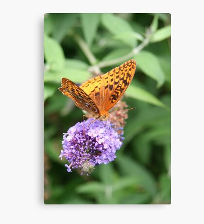 Summer Wings - Great Spangled Fritillary Canvas Print