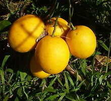 Perfect Lemons by pinetrees