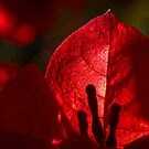 The power of red by Celeste Mookherjee