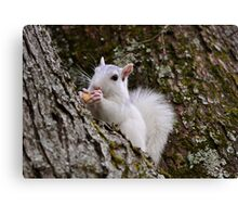 Will work for peanuts! Canvas Print