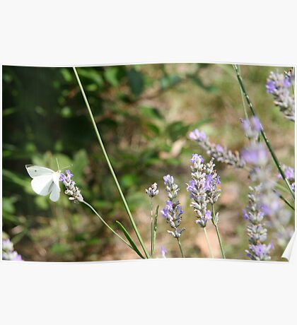 Summer Wings - Checkered White Poster
