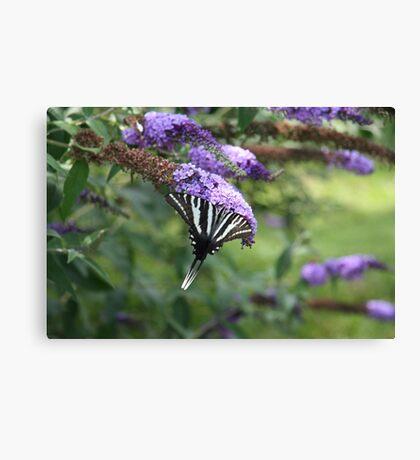 Summer Wings - Zebra Swallowtail Canvas Print