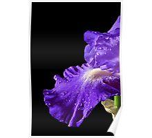 Blue Iris #4 Poster