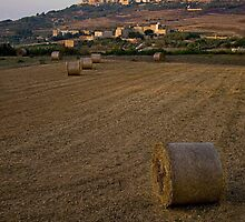 Harvest by Bokeh  Photography
