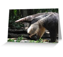 Lunch with an Anteater Greeting Card