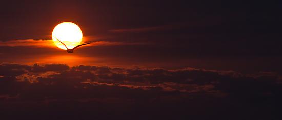 Lake Ontario sunrise  by mindrelic