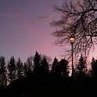 """Lamp Post In The Park"" by dfrahm"