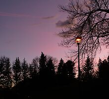 """""""Lamp Post In The Park"""" by dfrahm"""