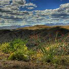 Desert Clouds by Diana Graves Photography