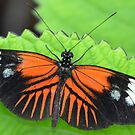 Butterfly on jagged leaf by Paula Betz