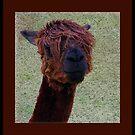 Alpaca by AngieBanta
