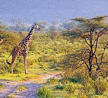 Giraffe in the Savannah by JenniferEllen