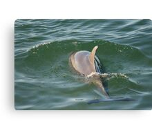 Hunting  Dolphin  Canvas Print