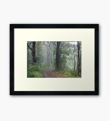 Fog in the Bush Framed Print