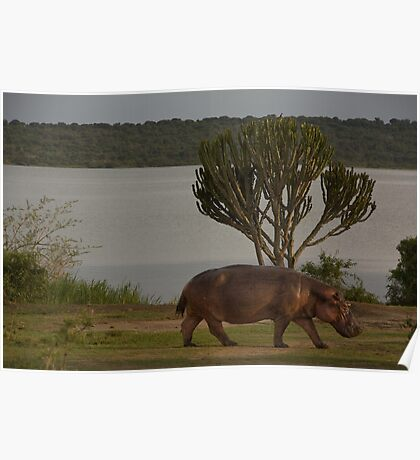 ugandan hippo lake Poster
