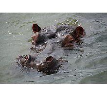 hippo head Photographic Print