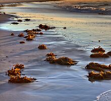 Morning Glow by Dianne English