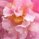 Camellia Gay Pixie by Melissa Stevenson
