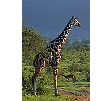 Stand Tall to the Right Photographic Print