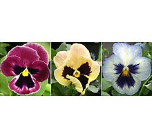 Pansy Montage Photographic Print