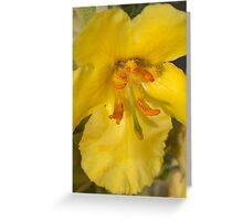 One amazing flower Greeting Card