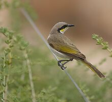 Desert Bird by donnnnnny