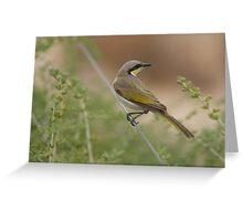 Desert Bird Greeting Card